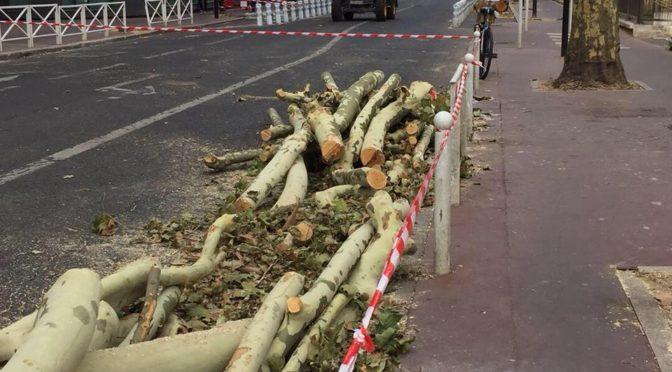 Abattage des platanes de l'avenue Jean-Jaurès à Montrouge
