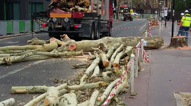 Suite de la protection de nos platanes à Montrouge
